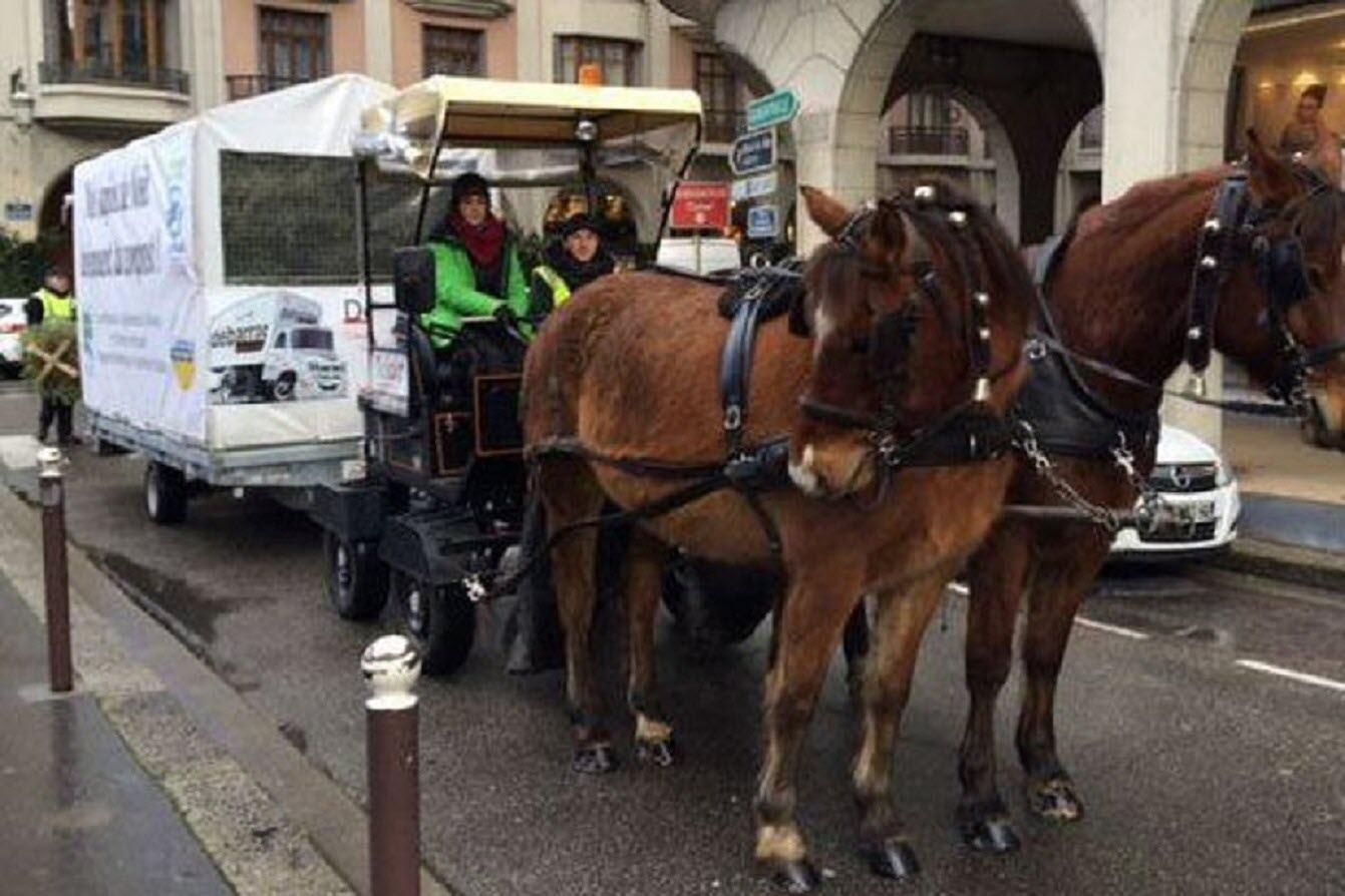 Savoie : plus de 5 tonnes de sapins récoltées à Chambéry et Aix-lesBains